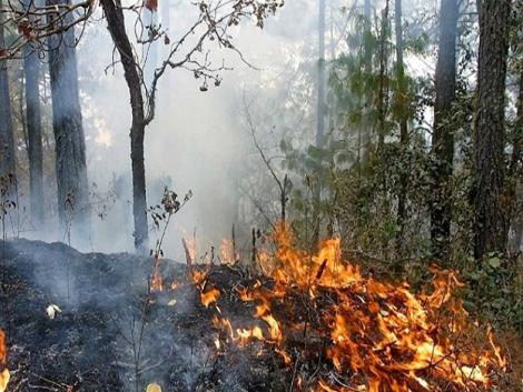 Regional gov. asks public to stop burning fields