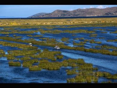 10,000 endangered frogs found dead in Lake Titicaca
