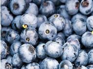 Peruvian blueberries go global