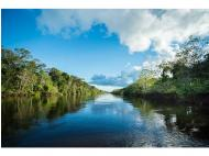 How can you help to protect the Amazon rainforest?