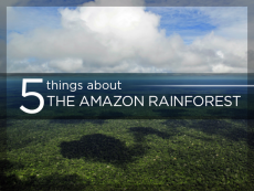 5 things about the Amazon rainforest
