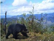 I spy an Andean Bear and a Mountain Tapir