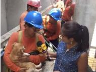 Pet rescued from floods