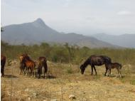 PHIMA Voyages: Private Nature Reserve of Chaparri