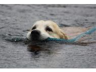 Reporters become animal rescue heroes (VIDEO)