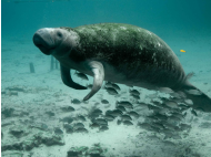 UK Researchers to Preserve Peru's Dolphins and Manatees
